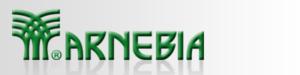 Arnebia